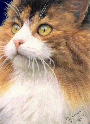 Granai - CAT CARAMELO Y NATA