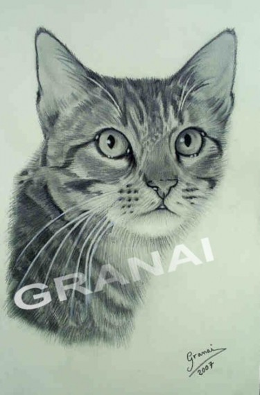 GATO,CHAT,CAT,GATTO-LE REGARD
